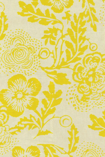 Cream Marigold - Camelia