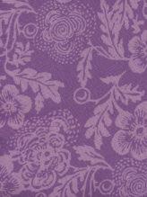 Lilac Camelia
